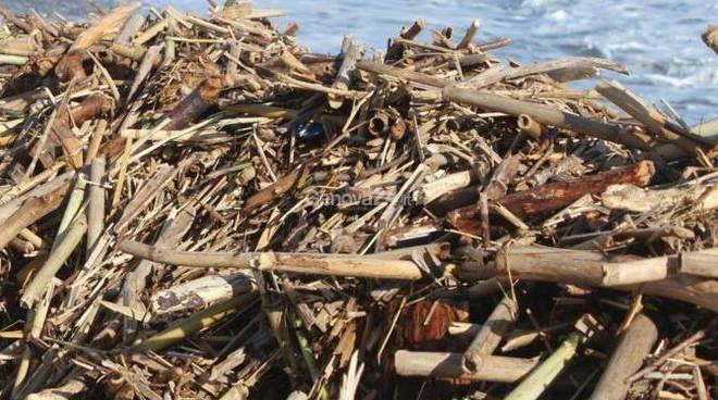 materiale ligneo depositato sugli arenili dalle mareggiate